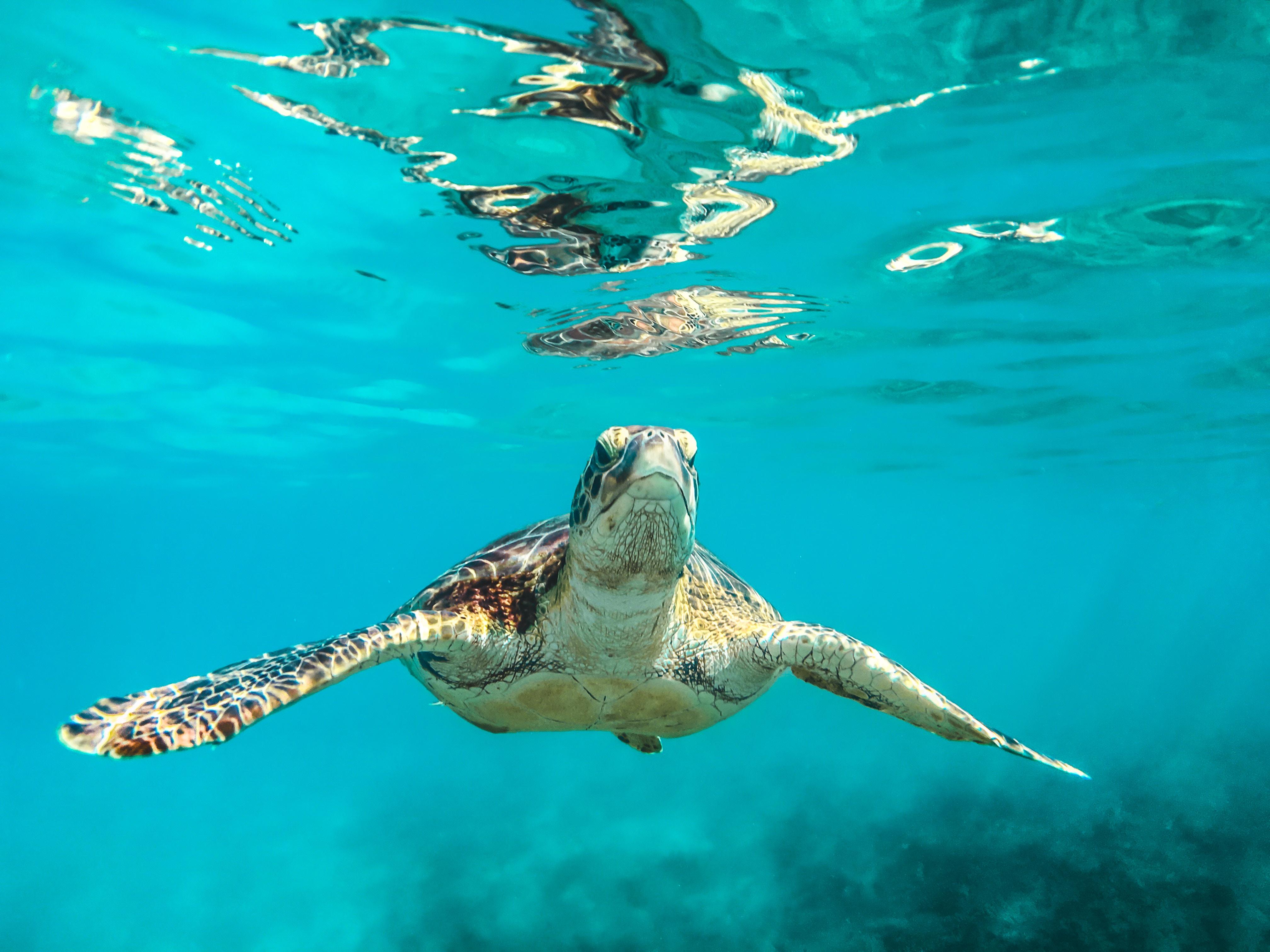 V minulosti korytnačky nemali škrupiny.